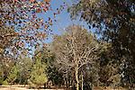 Israel, Sharon region. The trees garden in Ilanot