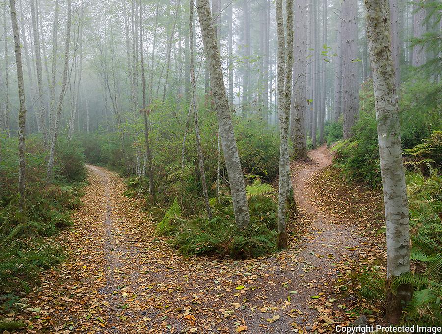 Vashon Island, Washington:<br /> Island Center Forest, Gallops trail in fog