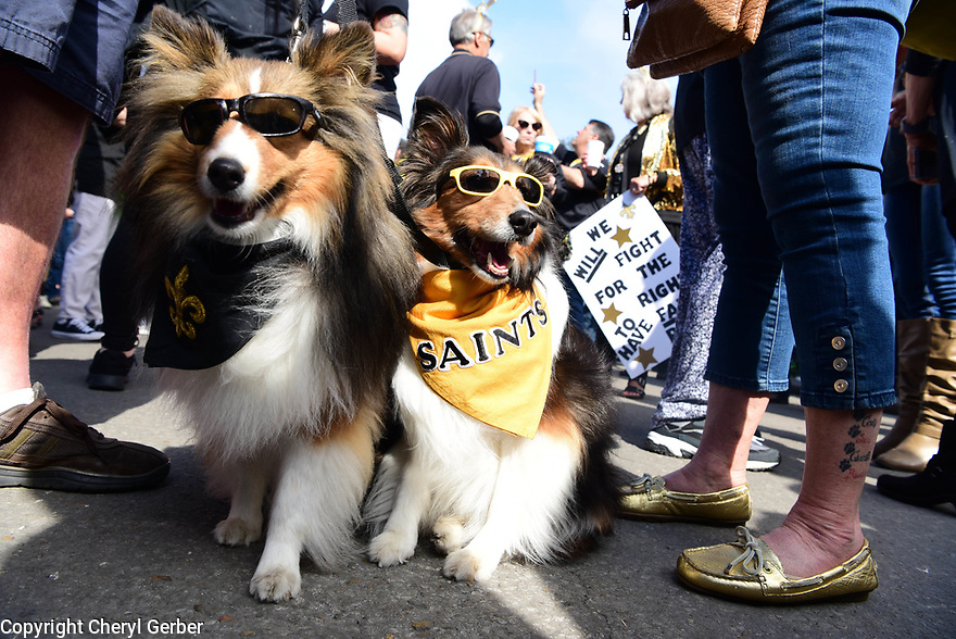 Saints fans take to the streets to celebrate Boycott Bowl after a bad call that possibly cost the Saints a trip to the Super Bowl.