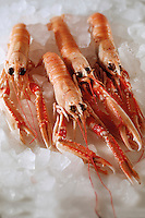Fresh Scampi or Dublin Bay Prawns stock photos