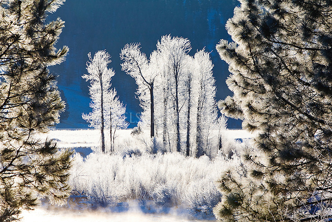 Frost covered trees on cold winter morning in Montana along the Blackfoot River