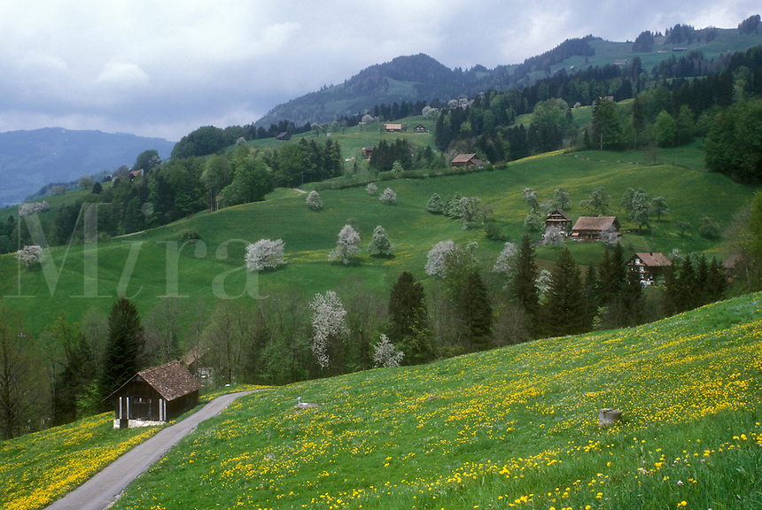 AJ1683, Switzerland, Alps, Schwyz, Europe, A road winds through the scenic countryside and farmland in the Canton of Schwyz in the spring.