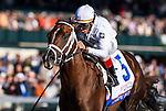 April 3, 2015: Carpe Diem, ridden by John Velazquez, wins the Blue Grass Stakes on Bluegrass Stakes Day at Keeneland Race Course in Lexington, Kentucky. Scott Serio/CSM