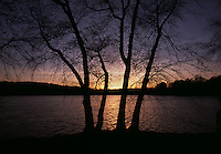 Winter trees at sunset at Jamaica Pond in the Emerald Necklace of Boston, Massachusetts.