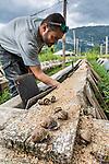 Snail farmer in France by Nathalie Houdin/Naturagency