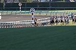 Orfevre winning Arima Kinen