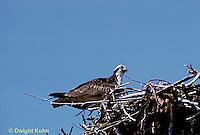 OS03-009z  Osprey - at nesting site - Pandion haliaetus