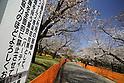 Cherry Blossoms Season 2021