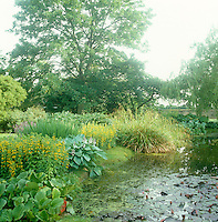The surface of the garden pond is covered in water lilies and its bank a mass of flowering shrubs