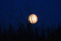 Binham, Norfolk, England, 07/08/2009..Full moon rising over farmland.