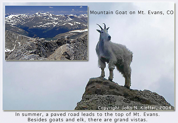 Mountain Goat.  John offers private photo tours and workshops throughout Colorado. Year-round.<br />