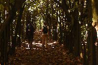 A walk down a path through a cocoa platation in Costa Rica.