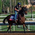 October 27, 2014:  Rich Tapestry, trained by C.W. Chang, exercises in preparation for the Breeders' Cup Xpressbet Sprint at Santa Anita Race Course in Arcadia, California on October 27, 2014. Scott Serio/ESW/CSM