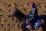 November 3, 2020: Ubettabelieveit, trained by trainer Nigel Tinkler, exercises in preparation for the Breeders' Cup Juvenile Turf Sprint at Keeneland Racetrack in Lexington, Kentucky on November 3, 2020. John Voorhees/Eclipse Sportswire/Breeders Cup/CSM