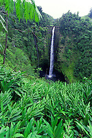 Spectacular Akaka Falls, the longest waterfall in Hawaii, cascades into a clear pool amid lush green foliage on the Hamakua Coast near Hilo on the Big Island of Hawaii.