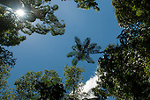 Fazenda Cagibi, Brazil. Atlantic rain forest tree canopies against a blue sky.