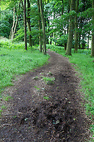 Northumberland, England, UK.  Hadrian's wall Footpath Passing through Woods near Grindon Milecastle.