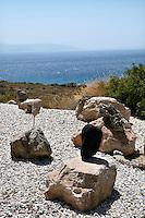 rocks in the courtyard