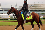 LOUISVILLE, KY - APRIL 27: Brody's Cause (Giant's Causeway x Sweet Breanna, by Sahm) exercises on track with rider Miguel Garcia in preparation for the Kentucky Derby. Churchill Downs, Louisville KY. Owner Albaugh Family Stable, trainer Dale L. Romans. (Photo by Mary M. Meek/Eclipse Sportswire/Getty Images)