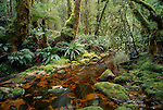 Forest in Chalky Inlet in Fiordland National Park. New Zealand.