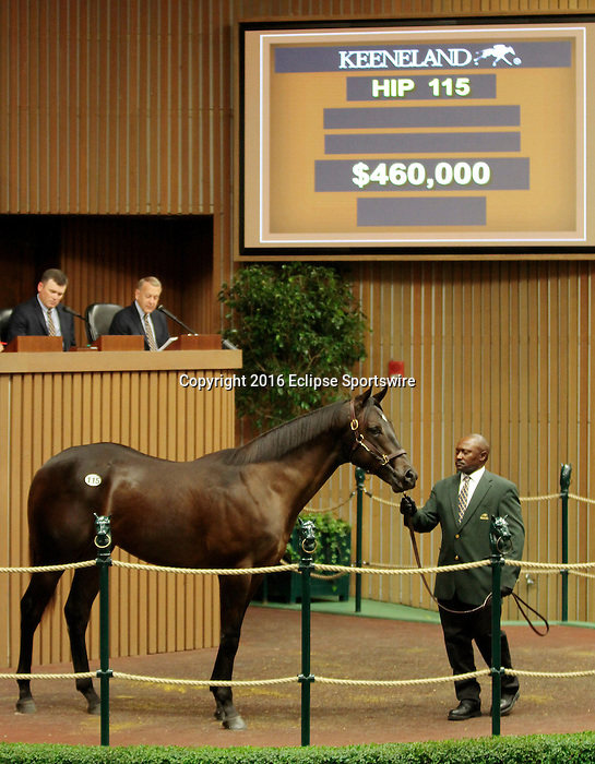 LEXINGTON, KY - September 12: Hip # 115 More Than Ready - Union Waters Colt consigned by Betz Thoroughbreds sold for $460,000 at the September Yearling sale at Keeneland.  September 12, 2016 in Lexington, KY (Photo by Candice Chavez/Eclipse Sportswire/Getty Images)