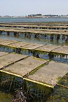 Austernzucht, Zucht von Austern, Auster in der Bretagne, Gestelle bei Ebbe, Niedrigwasser trocken gefallen, darauf liegen die Netztaschen mit den Muscheln, Frankreich, Atlantik, Atlantischer Ozean, Aquakultur, oyster culture, oyster farming, oyster, Brittany, France, Atlantic Ocean, Atlantic, aquaculture, mariculture, ostréiculture, Pazifische Auster, Pazifische Felsenauster, Pazifische Zuchtauster, Japanische Auster, Portugiesische Auster, Crassostrea gigas, Crassostrea pacifica, Crassostrea angulata, Magallana gigas, Pacific oyster, Japanese oyster, Miyagi oyster, Pacific cupped oyster, Portuguese oyster, Huître creuse du Pacifique