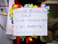 "Pictured: A ""Hound Dogs for Sale, Good Homes Only (No Rabbits) sign on a shop front. Friday 22 September 2017<br /> Re: Porthcawl Elvis Festival 2017, at the seaside town in Wales, UK"