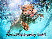 REALISTIC ANIMALS, REALISTISCHE TIERE, ANIMALES REALISTICOS, dogs, paintings+++++SethC_Rocky_IMG_6264revwork2,USLGSC62,#A#, EVERYDAY ,underwater dogs,photos,fotos ,Seth