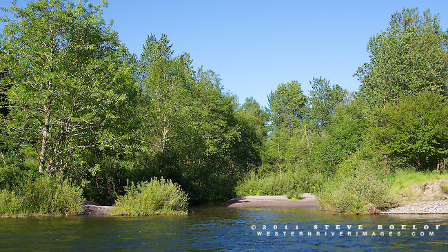 Alder and willow at the entrance of a backwater alcove along the river.