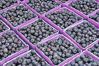 Blueberries  at Lake  Oswego Farmar's Market, Oregon