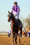 November 7, 2020 : Order of Australia, ridden by Pierre-Charles Boudot, wins the FanDuel Mile presented by PDJF on Breeders' Cup Championship Saturday at Keeneland Race Course in Lexington, Kentucky on November 7, 2020. Leah Vasquez/Breeders' Cup/Eclipse Sportswire/CSM