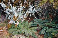 Flora on Campbell Island