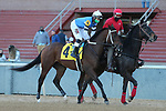 January 22, 2021: Big Thorn (4) with jockey David Cabrera aboard before the Smarty Jones Stakes at Oaklawn Racing Casino Resort in Hot Springs, Arkansas on January 22, 2021. Justin Manning/Eclipse Sportswire/CSM