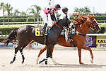 Angelofdistinction on post parade for The Carry Back Stakes (G3), Calder Race Course, Miami Gardens Florida. 07-07-2012.  Arron Haggart/Eclipse Sportswire.