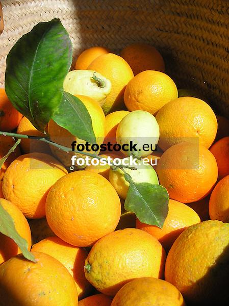 fresh organes and lemons from the Sóller valley in a basket<br /> <br /> Naranjas y limones frescos del valle de Sóller en una cesta <br /> <br /> frische Orangen und Zitronen aus dem Sóller-Tal in einem Korb<br /> <br /> 2481 x 1860 px