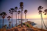 Palms grace a promontory on Phuket Island, Thailand