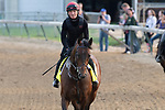 LOUISVILLE, KY - MAY 3:  Mendelssohn, trained by Aidan O'Brien, exercises in preparation for the Kentucky Derby at Churchill Downs on May 3, 2018 in Louisville, Kentucky. (Photo by Eric Patterson/Eclipse Sportswire/Getty Images)