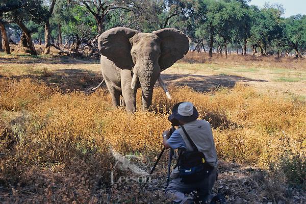 Photographing elephant bull, Manna Pools Nat. Park, Zimbabwe.