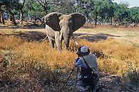 Photographing elephant bull, Manna Pools Nat. Park, Zimbabwe.