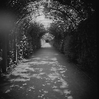 """A tunnel of vegetation works its way through Garden Mirabelle.  This magical garden can be seen in the classic film """"The Sound of Music.""""  This was shot using a Diana F+ Camera on 120mm film and processed in NYC."""
