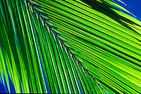 Palm leaves illuminated by sunlight with blue sky in the background
