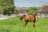 France, Calvados (14), Pays d'Auge, Mery-Corbon, Haras // France, Calvados, Pays d'Auge, Mery Corbon, stud fram