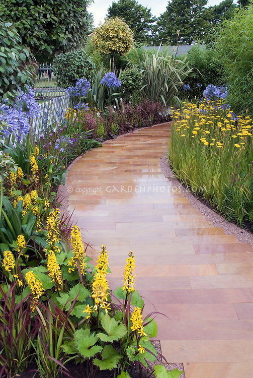 Blue and yellow themed perennial garden borders, Ligularia stenocephala, Agapanthus, Achillea, curving pathway