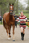 LEXINGTON, KY - APRIL 27: #62 Honor Me and rider Lisa Marie Fergusson jog before the vets and grand jury during the first horse inspection for the Rolex Three Day Event on Wednesday April 27, 2016 in Lexington, Kentucky. (Photo by Candice Chavez/Eclipse Sportswire/Getty Images)