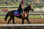 ARCADIA, CA  OCTOBER 31. Breeders' Cup Juvenile Fillies Turf entrant Etoile, trained by Aidan P. O'Brien,   exercises in preparation for the Breeders' Cup World Championships at Santa Anita Park in Arcadia, California on October 31, 2019.  (Photo by Casey Phillips/Eclipse Sportswire/CSM)