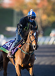 Safe Voyage, trained by John Quinn, exercises in preparation for the Breeders' Cup Mile at Keeneland 11.03.20.