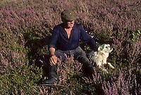 Europe/France/Limousin/Corrèze/Plateau de Millevaches :Paysan et ses chiens dans la  lande de bruyère en fleurs <br /> PHOTO D'ARCHIVES // ARCHIVAL IMAGES<br /> FRANCE 1980