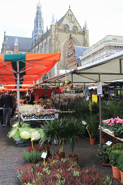 Market day and the Grote Kerk (great church) in the Grote Markt (market square), Haarlem, Netherlands