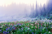 Wildflowers in fog. Mt. Rainier National Park, Washington