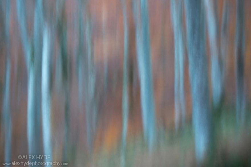 Motion blur abstract of Beech woodland {Fagus sylvatica}, Plitvice Lakes National Park, Croatia. November.